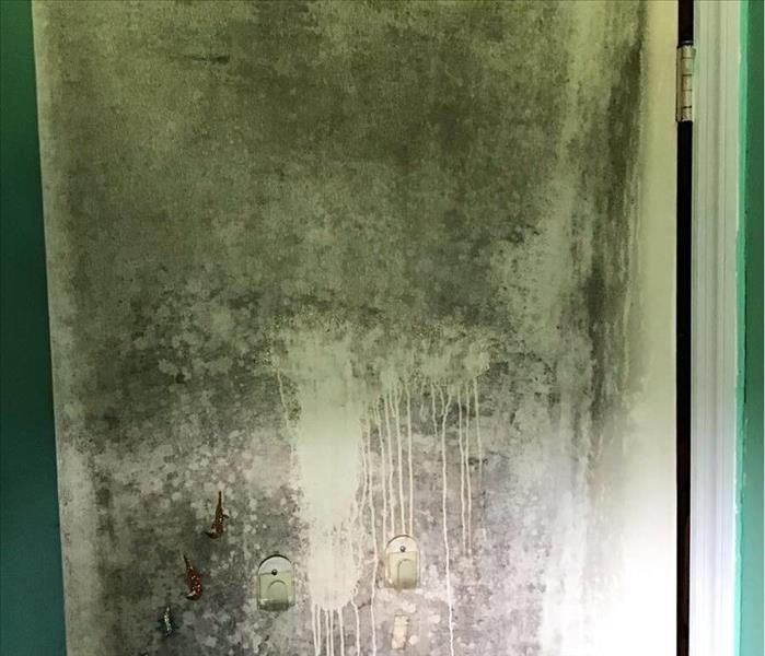 mold covered door inside house